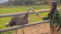 Tangan Ashanty dipatok burung unta atau ostrich saat liburan ke Afrika Selatan (Dok.Instagram/@ashanty_ash/https://www.instagram.com/p/B2mcBSlJYFE/Komarudin)
