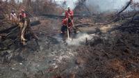 Petugas pemadam kebakaran lahan di Rupat menyiram bara api di gambut agar tak berkobar lagi diterpa angin. (Liputan6.com/M Syukur)