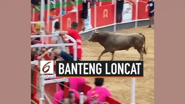 Acara adu banteng di Vidreres, Spanyol, menjadi kacau. Para penonton berhamburan untuk melarikan diri saat seekor banteng melompati tribun penonton. Sekitar 19 orang terluka karena insiden ini.