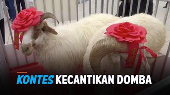 VIDEO: Unik, China Miliki Kontes Kecantikan Domba!