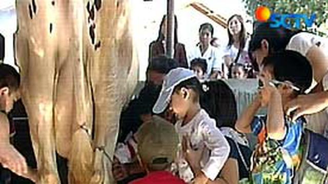 Mengenal Sapi Dan Susu Di Cimory Cisarua News Liputan6 Com