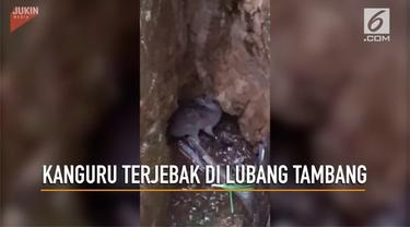 Seekor kanguru terjebak di lubang tambang di Australia.