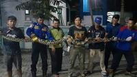 Ular Piton kerap muncul dan meresahkan warga di sejumlah daerah di Kabupaten Blora, Jawa Tengah (Liputan6.com/Ahmad Adirin)