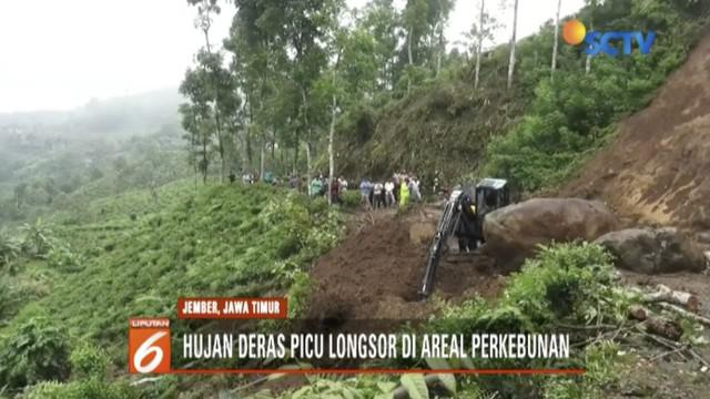 Hujan deras memicu longsor di areal perkebunan teh PTPN XII di Kecamatan Sumberbaru, Jember, hingga membuat akses jalan tertutup.