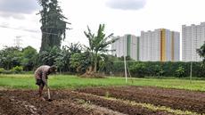 Petani menggarap kebunnya di kawasan Pramuka, Jakarta, Kamis (27/4). Lahan seluas hampir 2 hektar itu dimanfaatkan petani untuk menanam beragam jenis sayur seperti selada, kangkung, kemangi dan bayam. (Liputan6.com/Yoppy Renato)