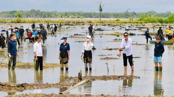 Jokowi Targetkan Rehabilitasi 600 Ribu Hektare Hutan Mangrove di Kaltara dalam 3 Tahun