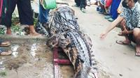 Buaya sepanjang hampir 4 meter yang ditangkap warga Kota Dumai karena meresahkan. (Liputan6.com/M Syukur)