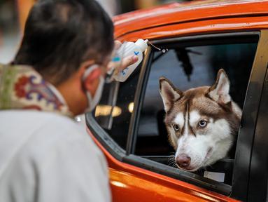 Anjing dalam mobil menerima pemberkatan dari pendeta saat pemberkatan drive-thru hewan peliharaan di Manila, Filipina, 4 Oktober 2020. Pemberkatan drive-thru hewan peliharaan ini diadakan di tengah pandemi COVID-19 untuk merayakan Hari Hewan Sedunia setiap tanggal 4 Oktober. (Xinhua/Rouelle Umali)