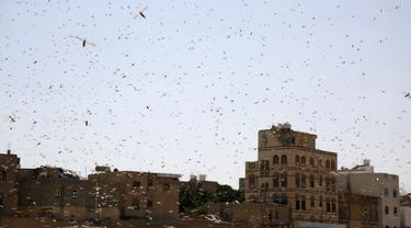 Sekawanan belalang gurun terbang di langit Sanaa, Yaman (9/10/2020). Kawanan belalang gurun menyerbu Sanaa, ibu kota Yaman, pada Jumat (9/10). (Xinhua/Mohammed Mohammed)