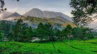 Perkebunan teh di kawasan Puncak.