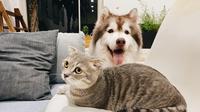 Ilustrasi anjing dan kucing (Dok.Unsplash/ Tran Mau Tri Tam)