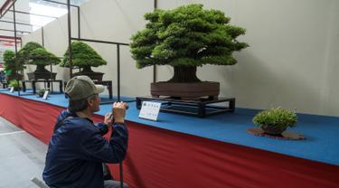 Pengunjung melihat bonsai yang ditampilkan saat Konvensi Bonsai Dunia ke-8 di Saitama, Tokyo, Jepang, Sabtu (29/4). Konvensi Dunia Bonsai telah kembali ke Jepang untuk pertama kalinya dalam 28 tahun. (AFP PHOTO / Kazuhiro NOGI)