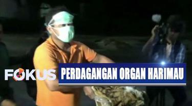 Dari tangan para pelaku didapatkan satu potongan kulit serta empat janin harimau Sumatera.