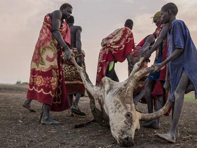 Penggembala dari suku Dinka menarik seekor sapi yang mati akibat sengatan kalajengking di kamp ternak mereka di Mingkaman, Lakes State, Sudan Selatan, Minggu (4/3). Musim kemarau terjadi di Sudan Selatan antara Desember dan Mei. (Stefanie GLINSKI/AFP)