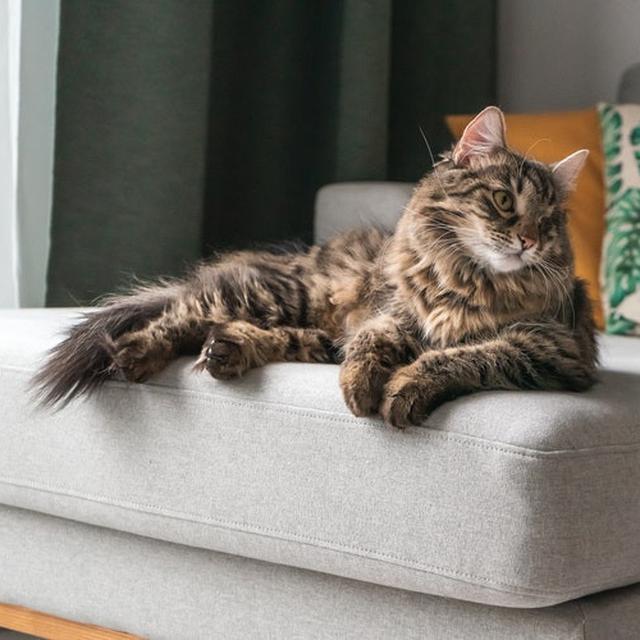 Makanan Kucing Persia Yang Bagus Untuk Bulu Perhatikan Kandungan Nutrisi Hot Liputan6 Com
