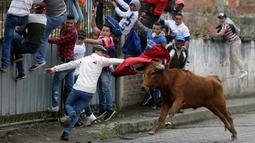 Seorang pria melemparkan jubahnya pada banteng muda dalam acara lari dikejar banteng di Pillaro, Ekuador, 4 Agustus 2018. Dalam acara ini, lusinan banteng dilepas dan berlari menabraki para pengunjung yang memadati jalan. (AP/Dolores Ochoa)