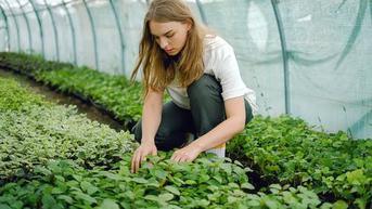 Cerita Akhir Pekan: Berkebun dan Bertani di Rumah Sendiri