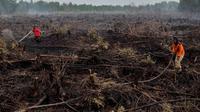 Pemadam kebakaran memadamkan api yang melalap lahan gambut di Pekanbaru, Provinsi Riau, (1/2). Lokasi ini merupakan salah satu dari 73 titik api yang terdeteksi menyebabkan kabut asap di pulau Sumatera. (AFP Photo/Wahyudi)