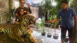 Pengunjung berpose dengan harimau yang wajahnya ditusuk dengan tongkat kayu di kebun binatang Pattaya, Thailand, Kamis (21/12). Aksi petugas kebun binatang itu menuai kritik dari jutaan netizen. (EDWIN WIEK/WILDLIFE FRIENDS FOUNDATION THAILAND/AFP)