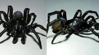 Laba-laba Pine Rockland Trapdoor Spider (Miami Zoo)