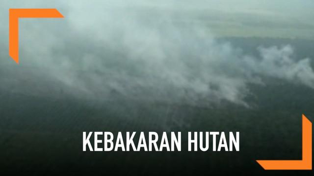 Sedikitnya 800 hektare hutan di Riau alami kebakaran. Hal ini membuat Gubernur Riau meminta bantuan pemerintah pusat.