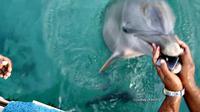 Seekor lumba-lumba mengembalikan telepon genggam penari yang sedang sibuk dalam acara pengambilan foto.