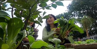 Kebun sayur Prilly Latuconsina (Youtube/ Prilly Latuconsina)