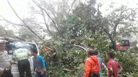 Pohon tumbang di Cianjur, Jabar, Selasa (9/1/2018). (Liputan6.com/Achmad Sudarno)