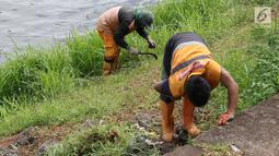 Petugas memotong rumput dengan arit di sepanjang bantaran Kanal Banjir Timur (KBT), Jakarta, Selasa (12/3). Tidak adanya mesin pemotong rumput menyebabkan para petugas melakukan perawatan rutin dengan alat seadanya.(Www.sulawesita.com)