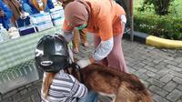 Sumatera Utara (Sumut) masuk 5 besar daerah di Indonesia dengan kasus positif rabies tertinggi