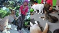 Tak Mudah untuk Norashikin, Merawat 30 Anjing dan 100 Kucing
