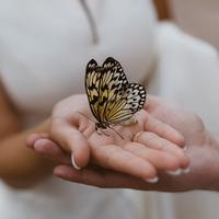 Mengejar cinta seperti mengejar kupu-kupu./Copyright shutterstock.com/g/mpreall