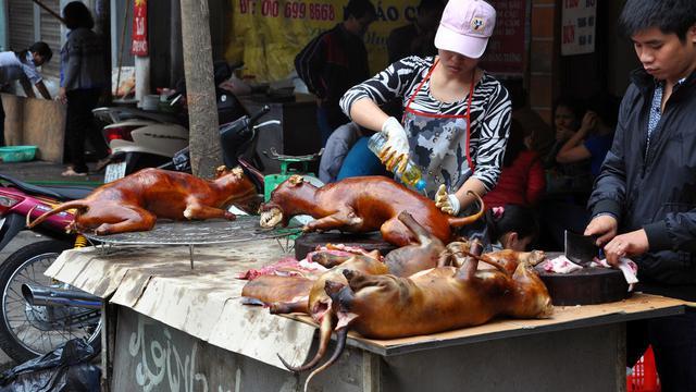 Solo Surga Kuliner Anjing Ribuan Ekor Dibantai Setiap Hari