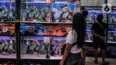 Pengunjung melihat ikan Louhan milik salah satu peserta kontes saat Soul of Competition di Pasar Ikan Hias Johar Baru, Jakarta, Minggu (24/10/2021). Kontes yang diikuti 160 peserta dari berbagai kota di Indonesia ini digelar hingga Senin (25/10). (merdeka.com/Iqbal S. Nugroho)