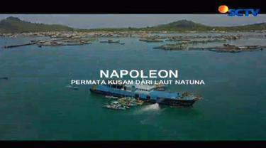 Tingginya harga jual lebih dari Rp 1 juta per kilogram menjadi nilai investasi menggiurkan bagi nelayan pebudidaya napoleon seperti Basar.