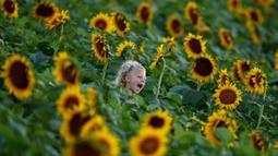 Emma Fischer (5) berlarian melalui ladang bunga matahari di Grinter Farms, dekat Lawrence, Kansas, 8 September 2018. Ladang bunga Matahari itu menarik wisatawan pada akhir pekan selama musim panas saat bunga-bunga bermekaran. (AP Photo/Charlie Riedel)