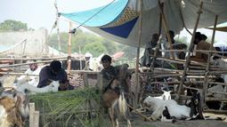 Para pedagang menunggu pembeli di pasar ternak menjelang Hari Raya Idul Adha, atau Hari Raya Kurban, di Rawalpindi, Provinsi Punjab, Pakistan timur, (17/7/2020). (Xinhua/Saeed Ahmad)