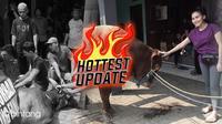 Hottest Update Suasana Penyembelihan Hewan Qurban di Rumah Ayu Ting (Ruswanto/bintang.com)