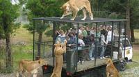 Punya Nyali Besar? Ikut Tur Kandang Singa di Kebun Binatang Ini (sumber. TheDodo.com