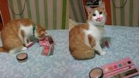 Ini 5 Potret Menggemaskan Saat Kucing Pakai Makeup (sumber: Instagram.com/receh.id)