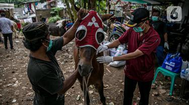 Dokter hewan Dinas Ketahanan Pangan, Kelautan dan Pertanian (KPKP) memeriksa kesehatan kuda delman di Jakarta, Kamis (4/2/2021). Kegiatan dilakukan untuk memberi bantuan pakan dan pemeriksaan kesehatan serta pengambilan sampel. (Liputan6.com/Faizal Fanani)