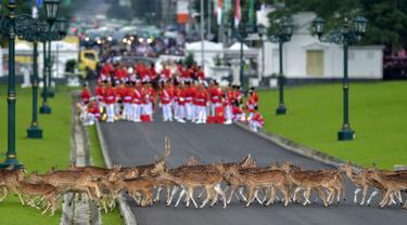 Gerombolan rusa melintas di Istana Bogor jelang kedatangan rombongan Raja Salman, Bogor, Rabu (1/2). Raja Salman membawa sebanyak 1.500 orang termasuk di dalamnya putera mahkota, pangeran dan para menteri. (AFP PHOTO / POOL / Dita Alangkara)