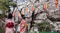 Pengunjung berpakaian Kimono melihat bunga sakura yang mekar di taman Tokyo, Jepang, Jumat (23/3). Mekarnya sakura menjadi momen yang paling ditunggu oleh para turis asing di Jepang. (Foto AP/Eugene Hoshiko)