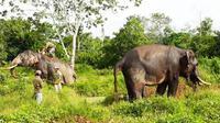 Dua gajah latih yang dikerahkan BBKSDA Riau untuk mengatasi gajah liar masuk kebun dan pemukiman di Indragiri Hulu. (Liputan6.com/Dok BBKSDA Riau/M Syukur)