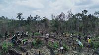 Peserta aksi penanaman pohon di Hutan Harapan Jambi, Sabtu (14/3/2020). Penanaman pohon ini dilakukan di kawasan bekas kebakaran hutan tahun lalu. (Liputan6.com / Gresi Plasmanto)