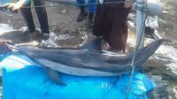 Lumba-lumba yang ditemukan terdampar di Pantai Bopong, Kebumen, akhirnya mati lantara luka yang dideritanya. (Foto: Liputan6.com/BKSDA/Muhamad Ridlo)