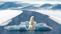 Ilustrasi beruang kutub di atas lapisan es. (Sumber Pixabay)