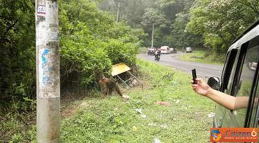 Citizen6, Sumatera: Pengunjung mengambil foto monyet dari dalam mobil yang terdapat di KM 51-56 dari Medan menuju Kota Berastagi. (Pengirim: Chairuddin)