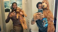 Pemilik akun twitter @wilkray membagikan momen manis bersama anjingnya bernama Pierre pada usia 8 minggu vs 8 bulan. (Twitter/@wilkray)