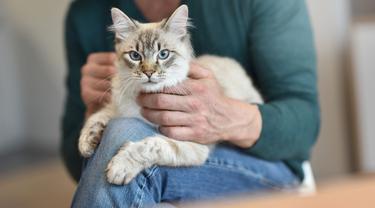 Kiat Tepat Mengelus Kucing, Dijamin Bebas Risiko Cakar dan Gigitan